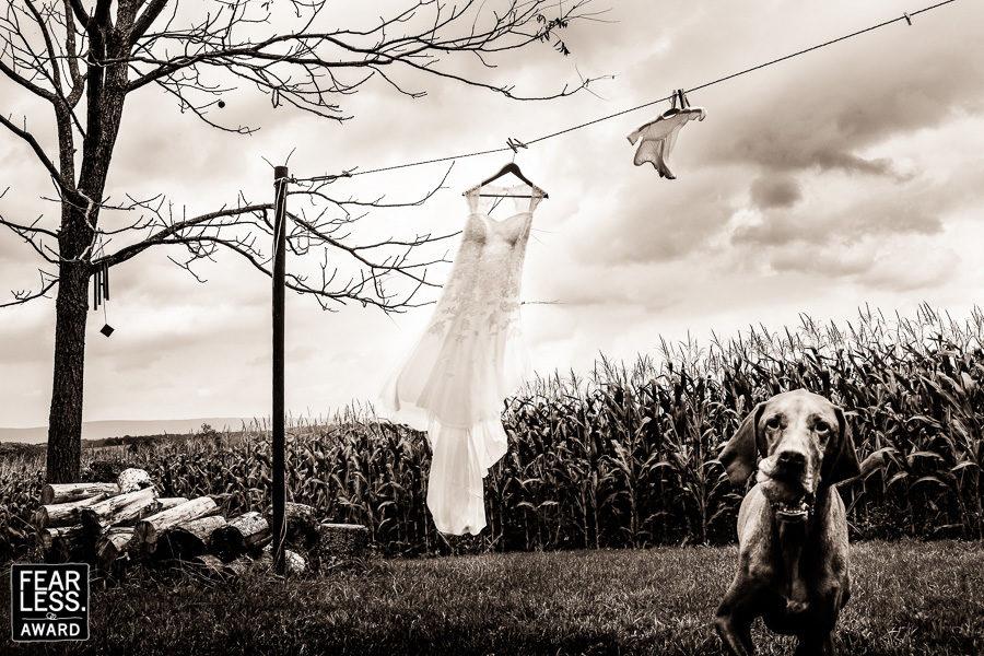 best-pa-wedding-photographers-creative-2