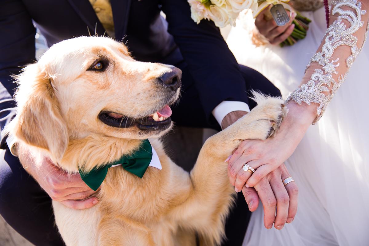 adorable dog wedding photos wedding ring and paws