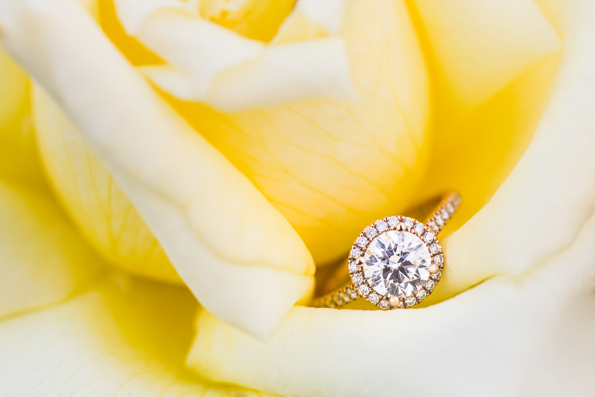 a sparkling engagement ring in a rose for a garden engagement