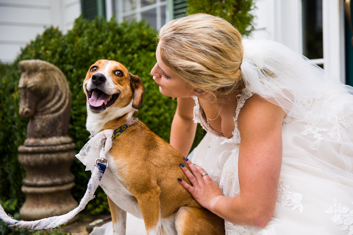 wedding pictures with dogs