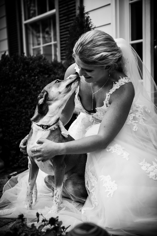 cute wedding photo ideas with dogs