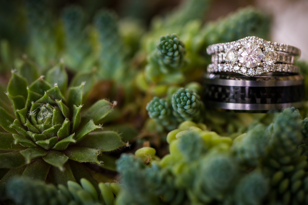 succulent wedding theme photograph with wedding bands and and engagement ring