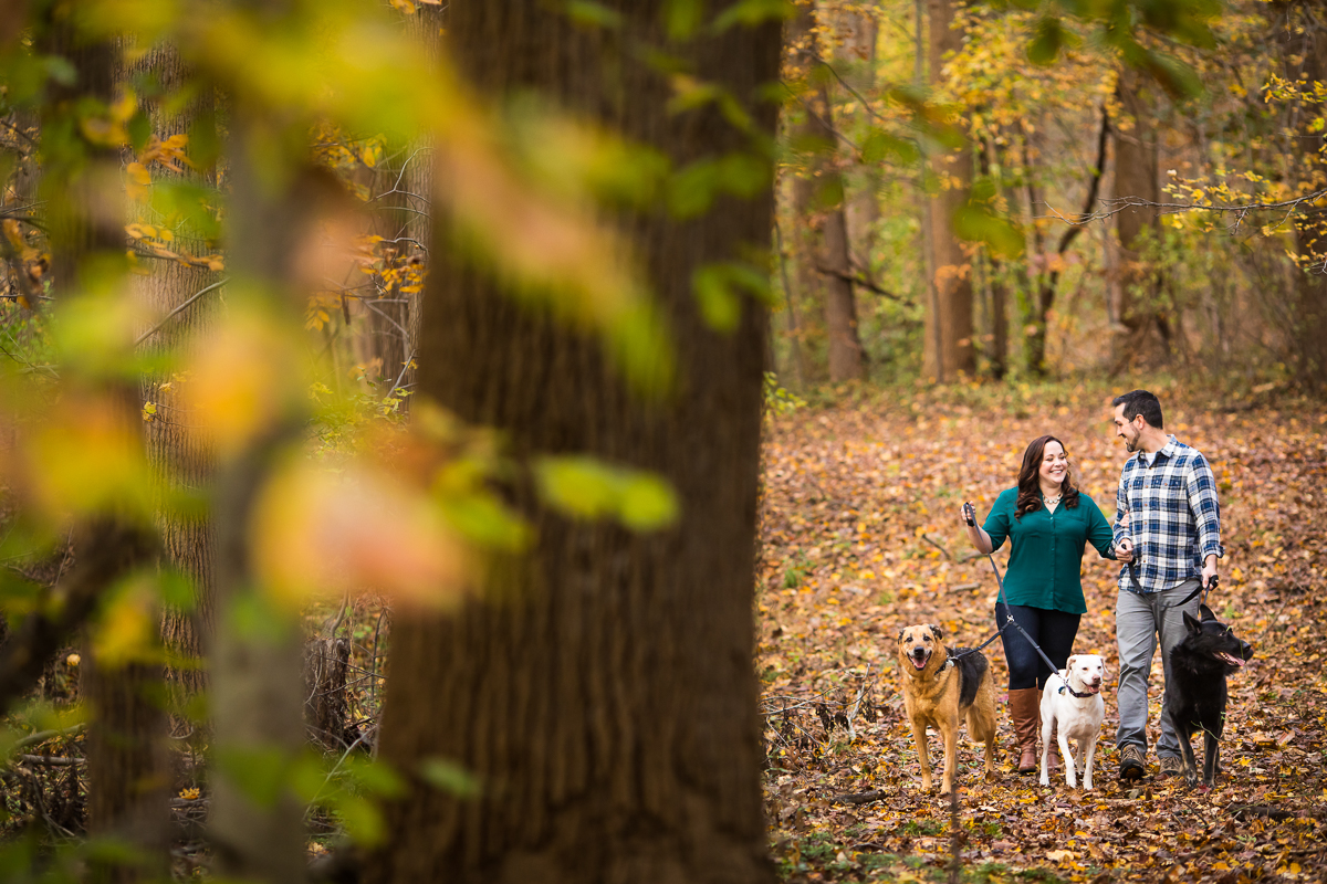 maryland couple in a park walking three dogs in the forest of a local park
