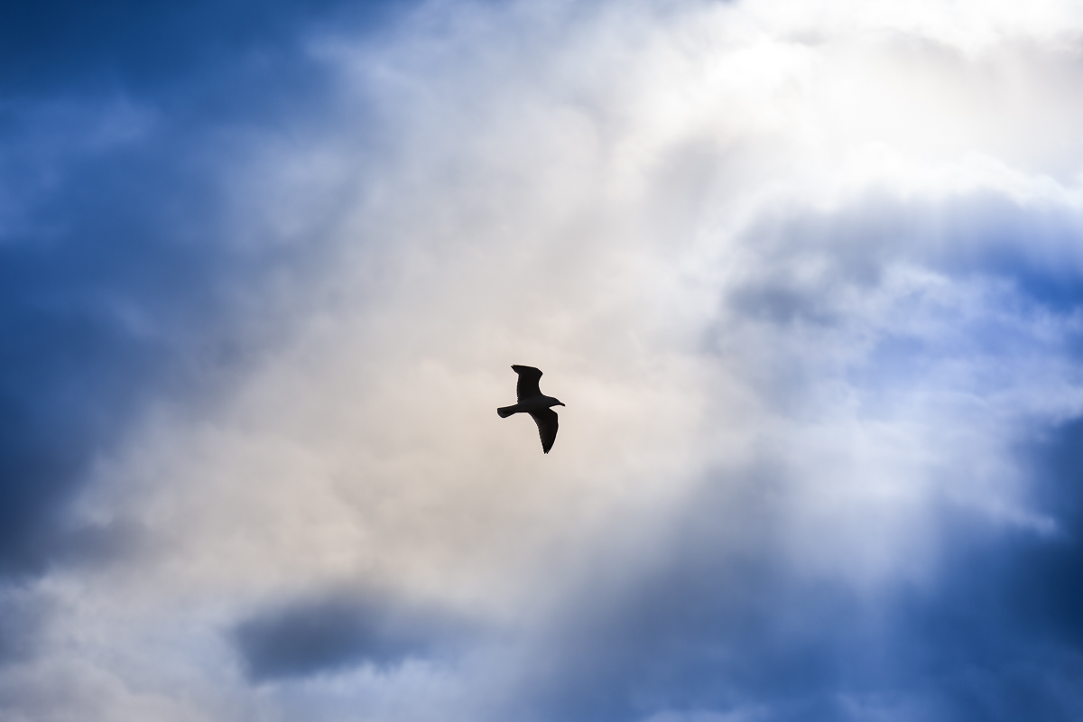 seagull soaring against bright stormy sky