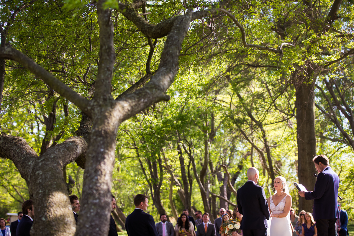 stevensville maryland wedding photographer captures the trees along the chesapeake bay at this photographic wedding venue of camp wright
