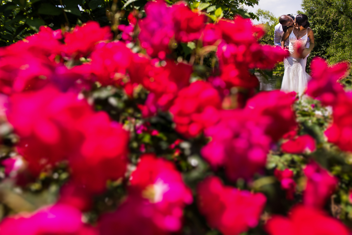 bride and groom kidding during wedding portraits framed with rose bushes in foreground